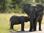 Elefant Kiddy